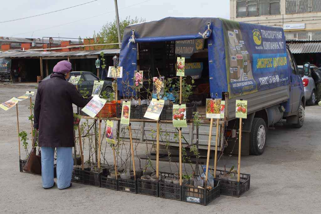 Приезжие из Кургана привезли продукцию питомника «Сады Зауралья».
