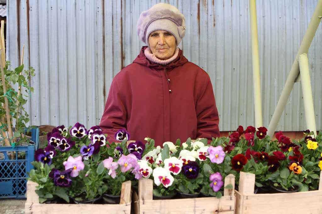 Много лет Татьяна Андреевна Пахолкова занимается выращиванием рассады и саженцев. Например, семена виолы (анютины глазки) она посадила в январе. И вот результат.