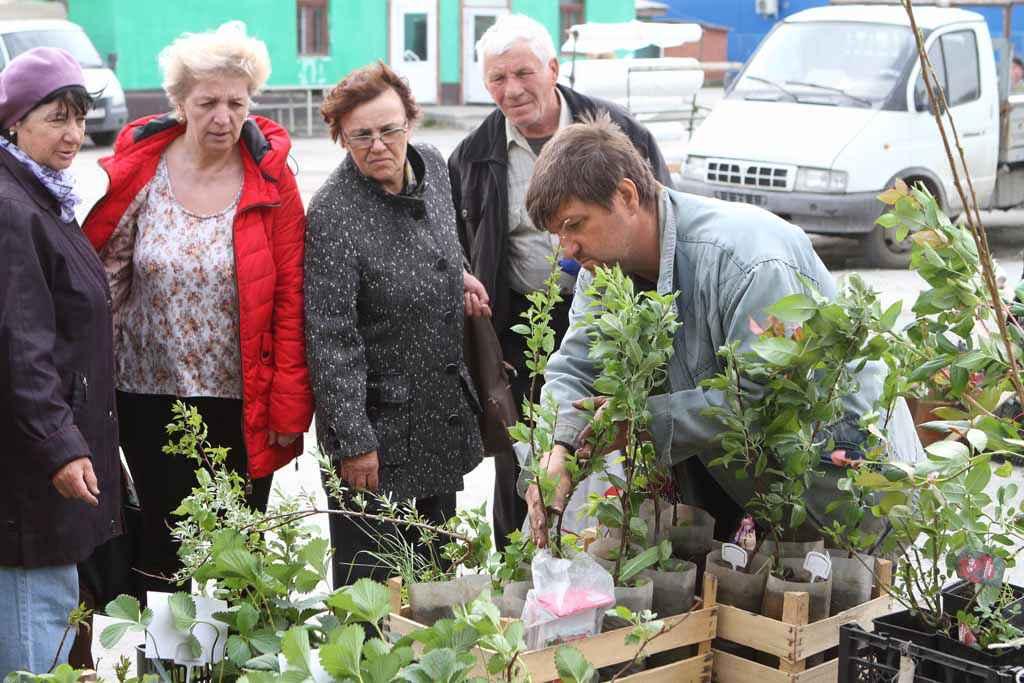 Торговая точка Татьяны Андреевны и Алексея Пахолковых привлекала внимание садоводов.