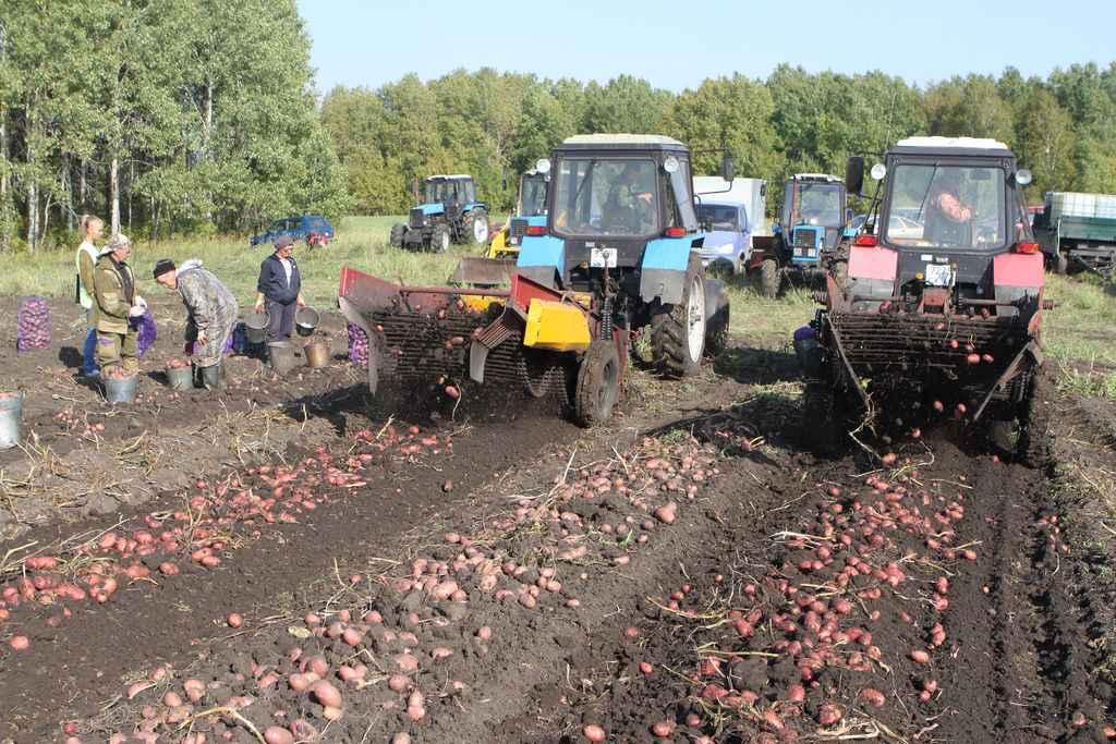КФХ «Шалягин» – победитель районного конкурса среди крестьянско-фермерских хозяйств. Создано хозяйство в 2013 году и занимается картофелеводством. В этом году валовой сбор картофеля – 1100 тонн, урожайность – 100 центнеров с гектара.
