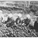 На картошке