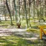 Танцующий лес.