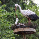 Над садом возвышается гнездо аистов.