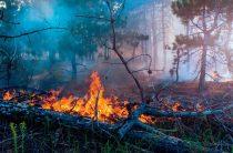 Борьба с огнём продолжается