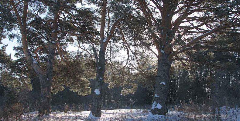 «День снега»