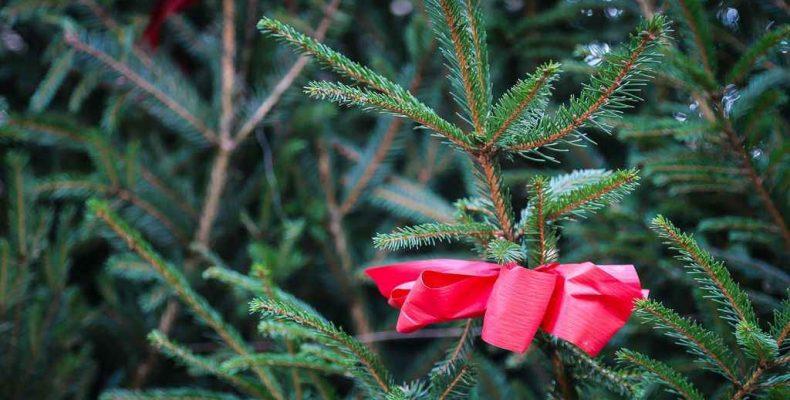 Как получить новогоднее деревце?
