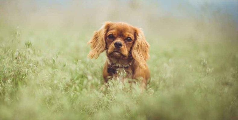 Берегите своих собак