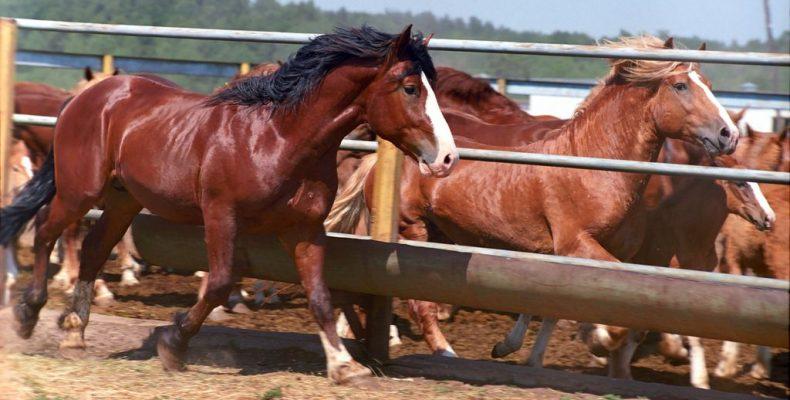 Эти знакомые незнакомые «лошадки»