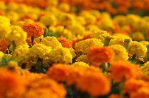 Высадили цветы