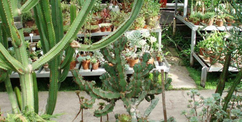 Правила «колючей» жизни, или Когда кактусу бывает плохо
