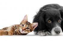 «Кошкин друг, собакин друг»