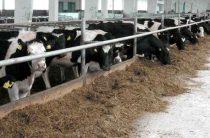 Мясное производство – на уровне