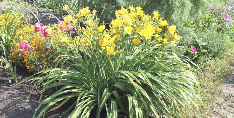 Аленький цветочек растёт в Обуховском
