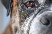 Как защититься от агрессивной собаки