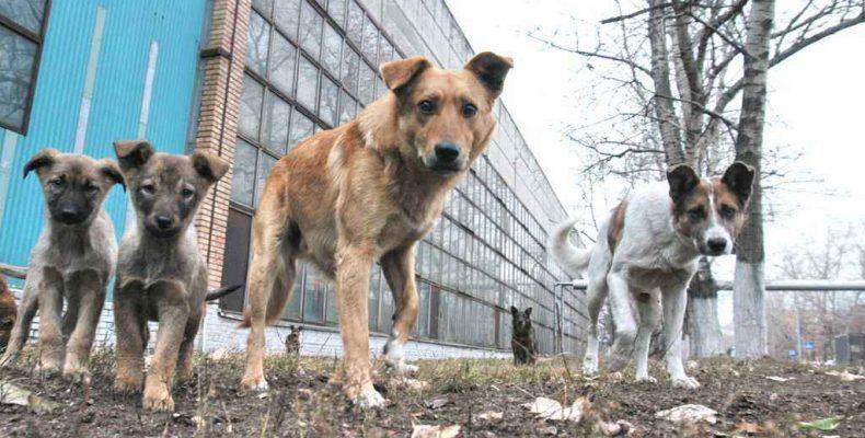Отлов собак возобновят