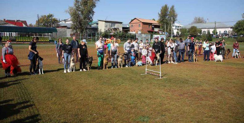 «Дог-калейдоскоп» любят и люди, и собаки (фото)