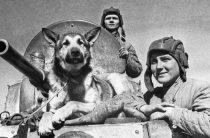 Собаки тоже воевали