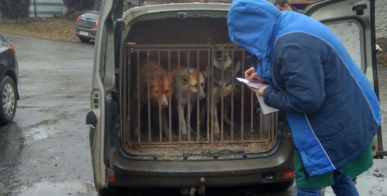 Собак вернули на улицы