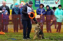Соревновались и собаки, и хозяева
