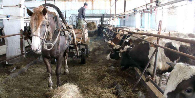 На ком ферма держится