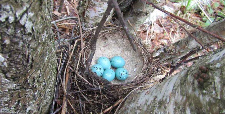 Что за птички ждут потомство?