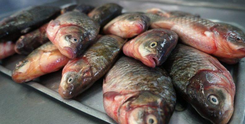 Телефоны – в рыбе