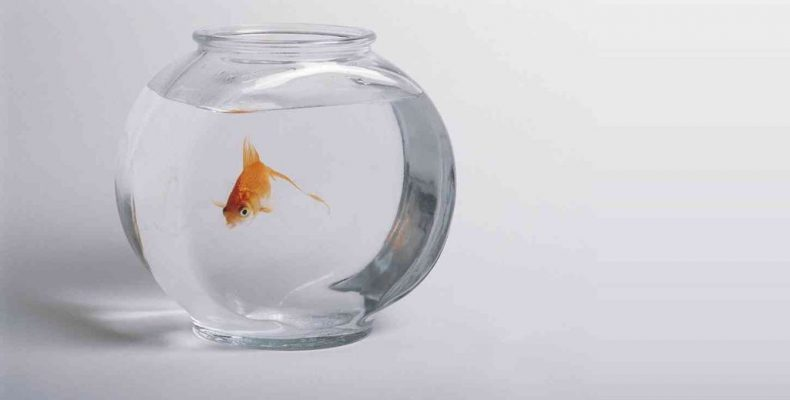 Будь добра, золотая рыбка!
