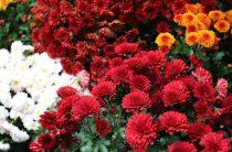 Золотые цветы Татьяны Куркатаевой