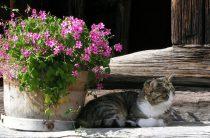 Заботы цветовода