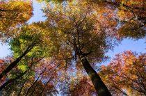 Осень правда золотая?
