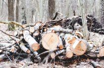 Лес вырубают на дрова!