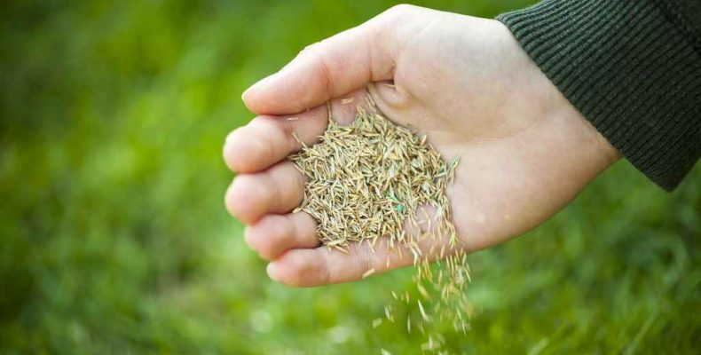 Семена смыло