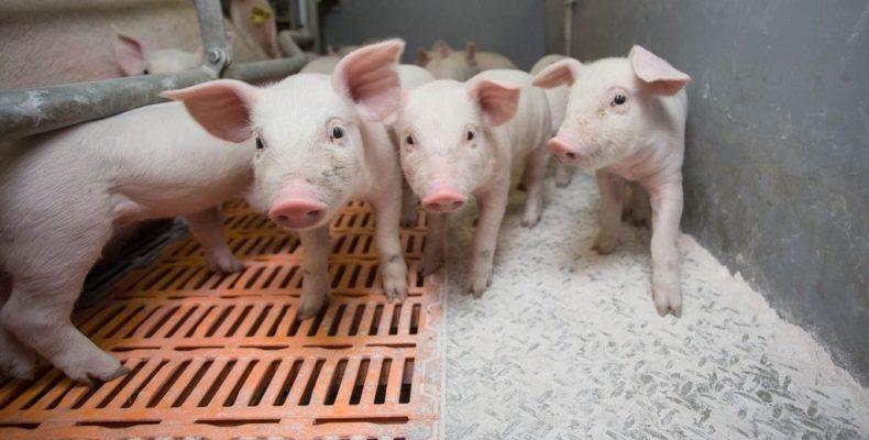 Объёмы производства мяса выросли