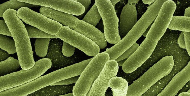 Профилактика острых кишечных инфекций