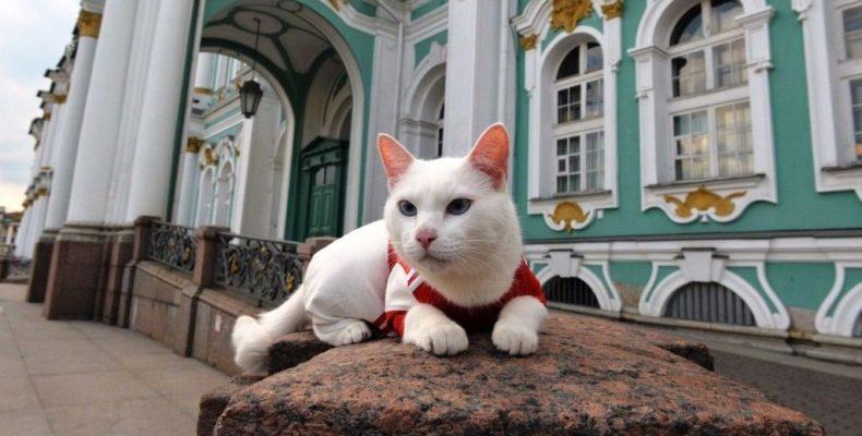 Каждый кот мечтает быть эрмитажным