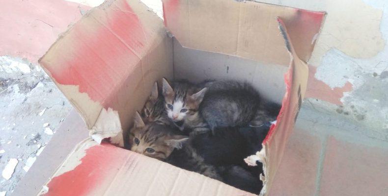 Котята «в подарок»