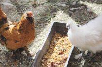 Украшение птичьего двора