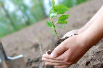Высадили восемь тысяч деревьев
