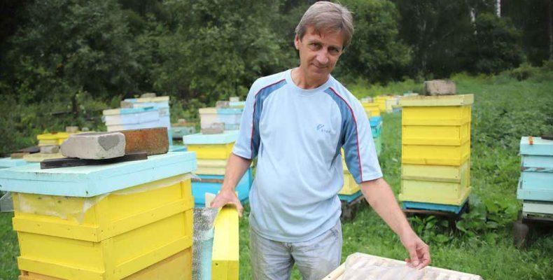 Мёд натуральный и «липовый»