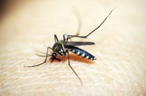 Едешь в тропики? Остерегайся комаров!