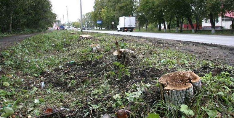 Деревья спилили. Что дальше?