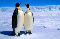 Открой для себя Антарктиду