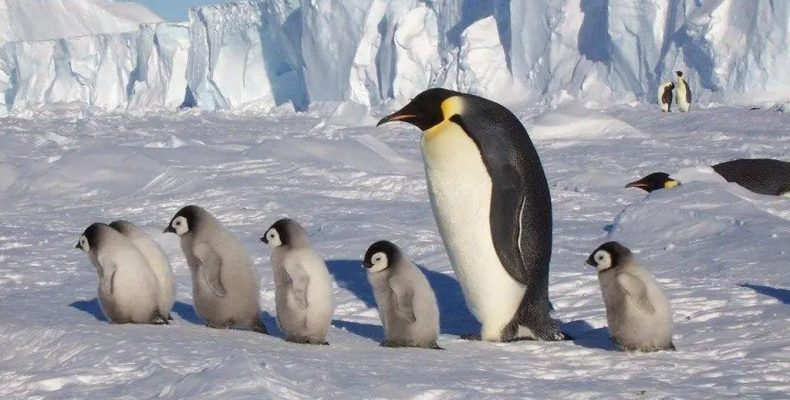 Почему люди не пингвины?