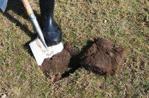 Итоги мониторинга состояния почвы
