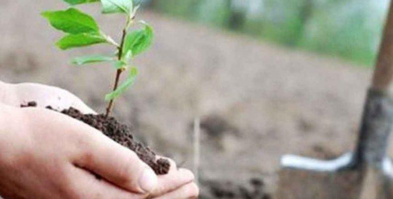 Высадят новые деревья
