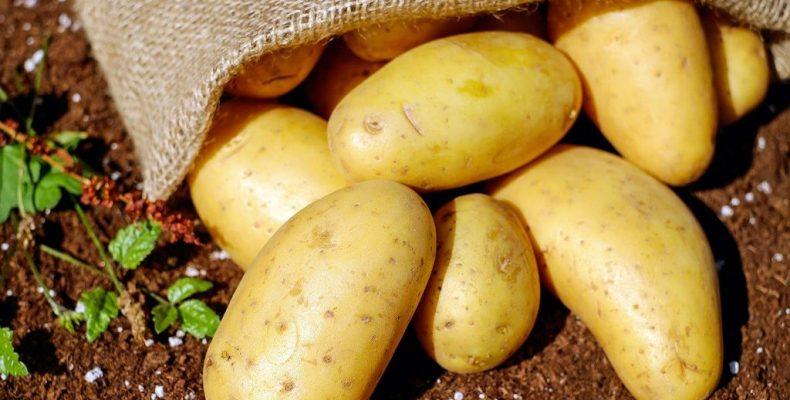 Крошка-картошка: правила уборки и хранения
