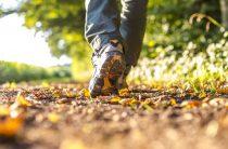 Защитили проект прогулки