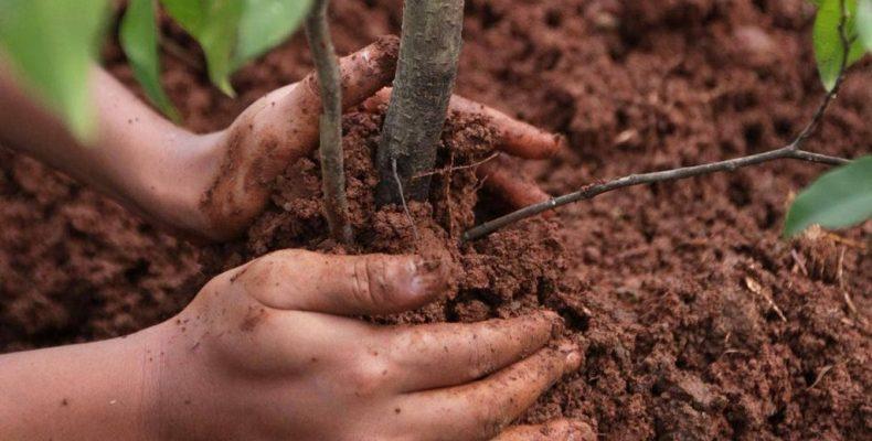 Саженцы для будущих урожаев