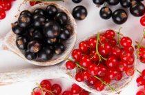 За витаминами – в плодопитомник