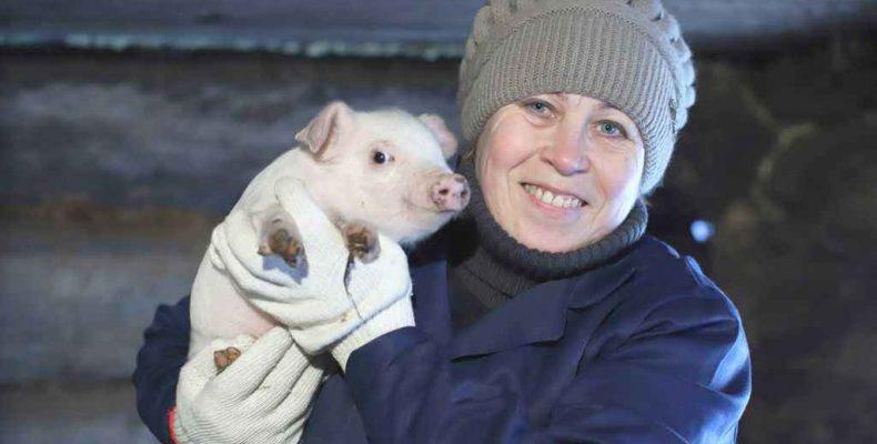 Свинка как картинка